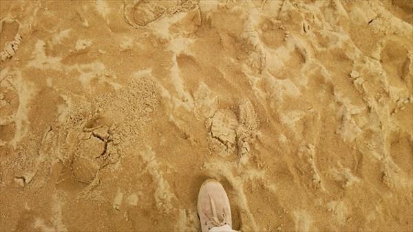 砂丘 湿ってる
