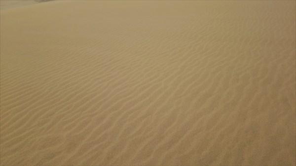 鳥取砂丘 風紋