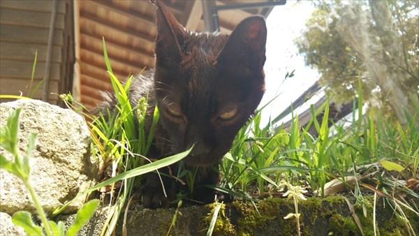 白兎神社 野良猫