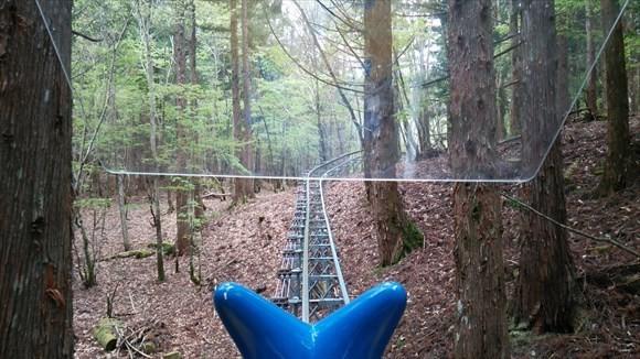 奥祖谷観光周遊モノレール 森林1