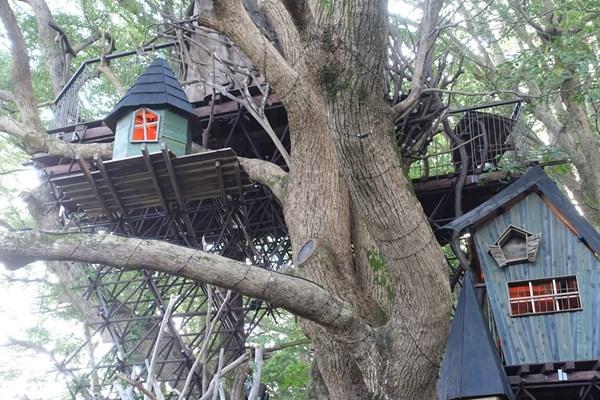 クスクスの森 ツリーハウス