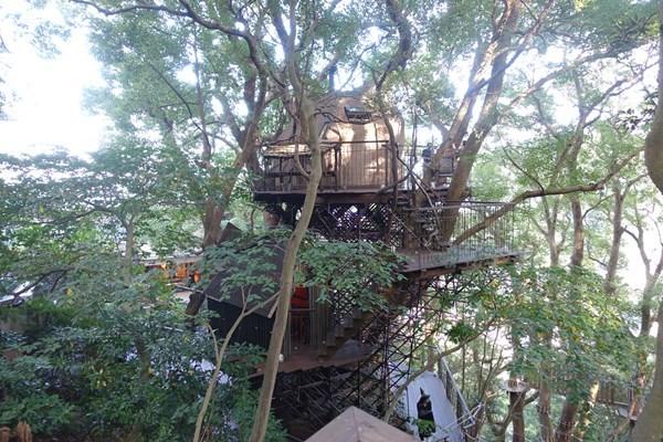 クスクスの森 ツリーハウス 上から見たら