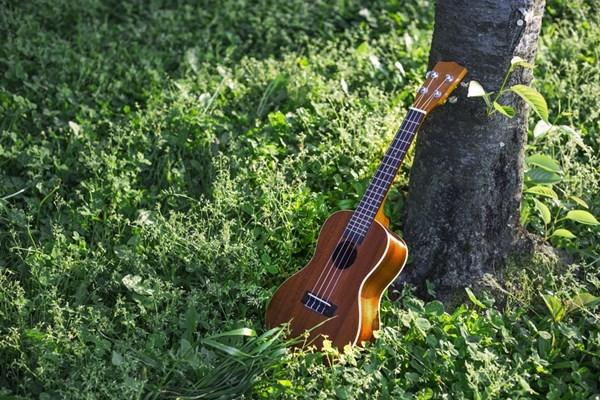 30代からの大人の趣味に「ウクレレ」がめっちゃおすすめ!楽器未経験者でもOKです。